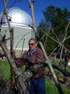 Vineyard manager Mike Neal
