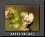 The Seasons at Jaffe Estate